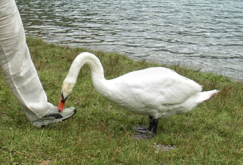 Словения, озеро Блед
