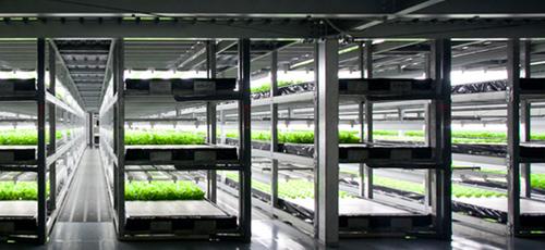 В Японии строят гигантскую роботизированную фабрику для выращивания латука