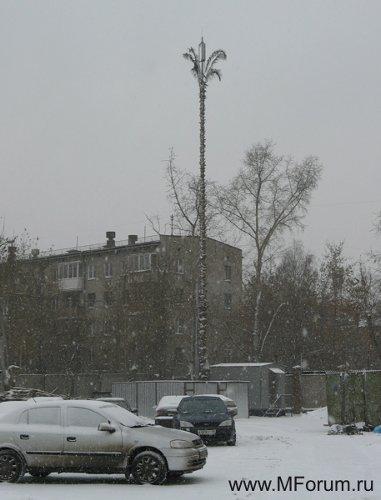 """Первая в Москве пальма """"МегаФона"""" на ул.Вятской рядом с д.27, где расположена техническая служба компании"""